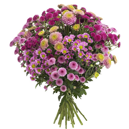 12 Best Flowers to Gift Your Beloved on Valentine's Day-chrysthamamums