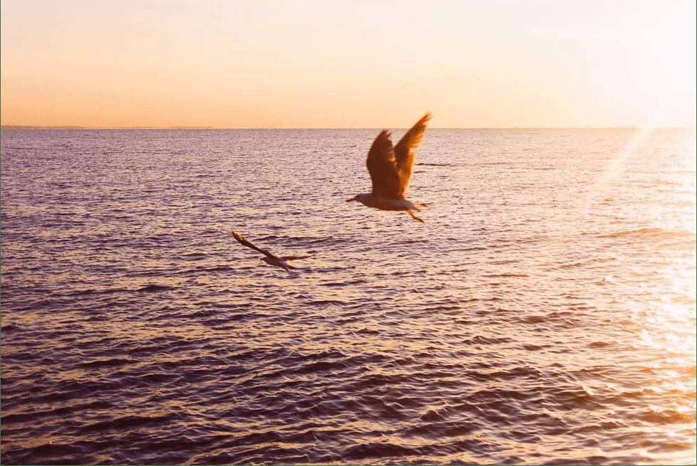 Dmitry Bayer - yellow horizon with seagulls