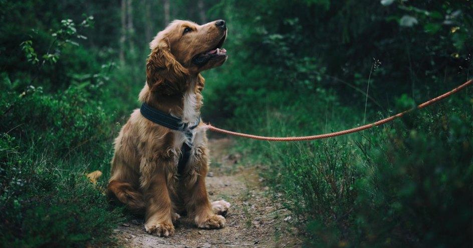 best dog walking jacket