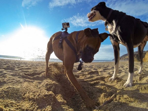 ht_gopro_fetch_harness_3_jc_140826_4x3_992