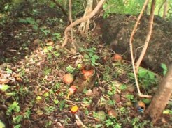Ritual objects in sacred grove