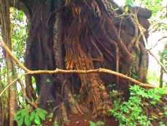 Sacred grove above Dossazor
