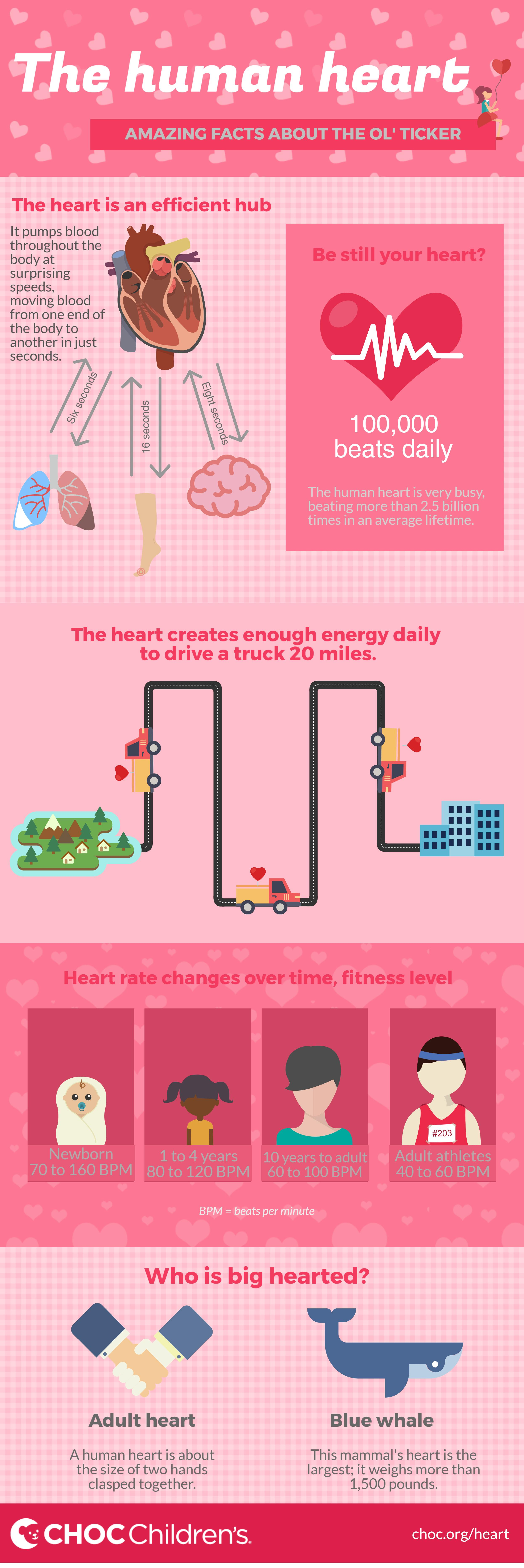 Infographic Amazing Heart Facts