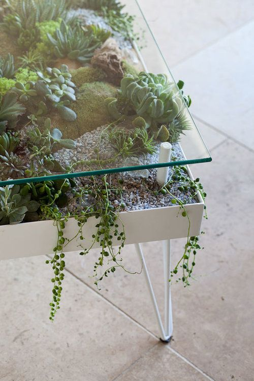 3 - Sukulent Moved To The Table! Coffee Table Terrarium Made