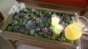 6 300x169 - Sukulent Moved To The Table! Coffee Table Terrarium Made