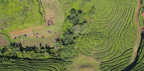 Pertanian merupakan salah satu unsur vital dalam pendekatan bentang alam.