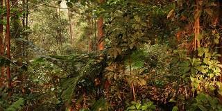 Forest at the foothills of Tangkuban Prahu near Bandung, Java, Indonesia/Tim Mowrer