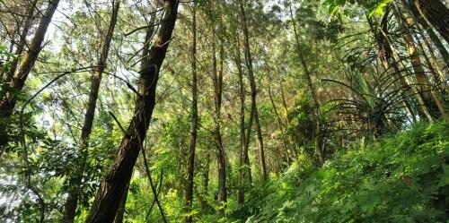 Hak bersama memanfaatkan produk hutan haruslah aman – dan manfaatnya harus terdistribusi secara merata dan adil di antara individu peserta. Foto: CIFOR / Aulia Erlangga