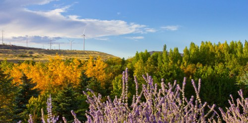 Flowers and Windmills