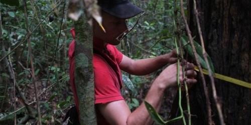 Pengukuran karbon menghasilkan data karbon pada biomassa pohon. Foto oleh James Maiden/ CIFOR.