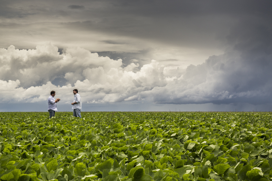 How to address new biofuel challenges when impacts on environment and society are 'mixed'