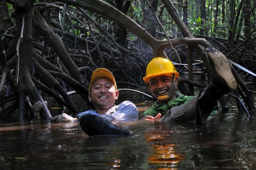 """Resaerchers Oki and Sigit in their """"theme park"""" mangrove research site. Kate Evans/CIFOR."""