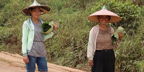 Perempuan yang tinggal di dalam hutan di Indonesia dilihat lebih baik daripada pria dalam merawat sumber daya keluarga. Mereka dengan demikian erat terlibat dalam upaya keluarga untuk mendapatkan, mempertahankan, dan kadang-kadang menyembunyikan kekayaan. CIFOR/Tim Cronin