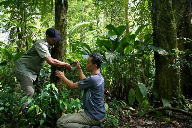 Ilmuwan CIFOR, Age Kridalaksana dan seorang petugas taman nasional mempersiapkan kamera pengintai di taman nasional Gunung Halimun-Salak. Mokhamad Edliadi/CIFOR