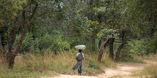 """Projek Hutan Nyimba"" akan membantu pemerintah lokal, ilmuwan dan masyarakat lokal membangun gambaran lebih lengkap bagaimana hutan Zambia dimanfaatkan dan dikelola dalam rangka lebih menselaraskan REDD+.CIFOR/Jeff Walker"