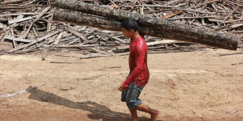 Ceruk pasar penjualan kayu membantu petani Amazon menambah pendapatan mereka, kata Peter Cronkleton, ilmuwan senior dengan Pusat Penelitian Kehutanan Internasional. Kredit foto: Peter Cronkleton.