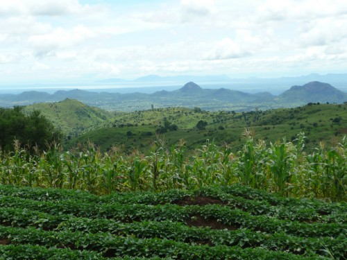 More research is needed to determine how well small agroforestry farms contribute to conservation. World Agroforestry Centre.