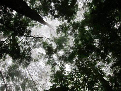 Para ilmuwan telah mengidentifikasi empat jenis pilihan kebijakan, termasuk pencocokannya di dalam peringkat transisi hutan berdasarkan efektivitas kemungkinan kebijakan untuk setiap tahap. CIFOR / Julie Mollins