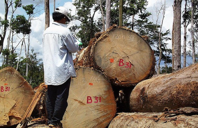 Scientific evaluation of forest certification is important to inform supporters whether they are getting value for their money.