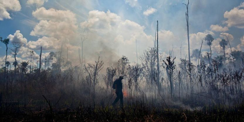 Between 1999 and 2010, fires in the understory of the Amazon forest burned more than 85,500 square km.