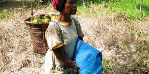 Hasil hutan non kayu semakin dihargai karena memberikan kontribusi bagi pendapatan mata pencaharian.