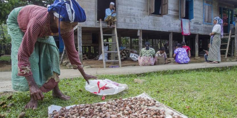 Penduduk desa Lubuk Beringin, Siti Bainor, mengeringkan biji kelapa sawit, di desa Lubuk Beringin, kabupaten Bungo, provinsi Jambi, Indonesia. Photo by Tri Saputro for Center for International Forestry Research (CIFOR).