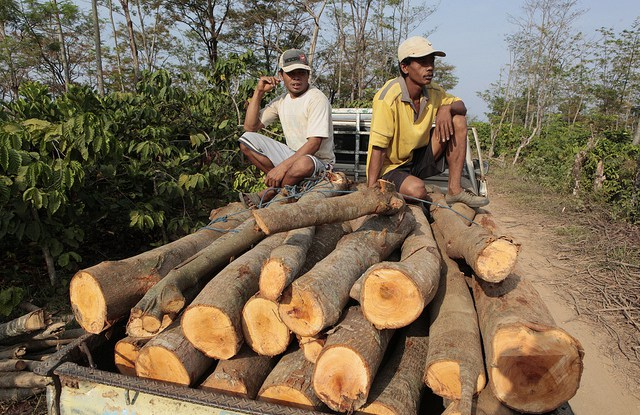 Between 15 percent and 30 percent of the timber traded on global markets is illegal, according to estimates by the UN Environment Program.