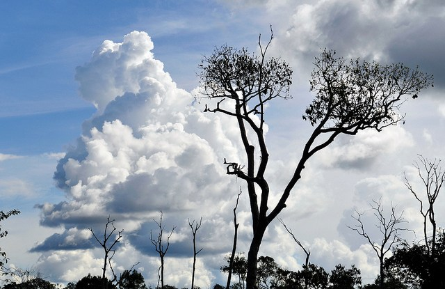 Despite tremendous progress in curbing deforestation in the Brazilian Amazon, modeling gives a glimpse of the potential negative impacts of climate change.
