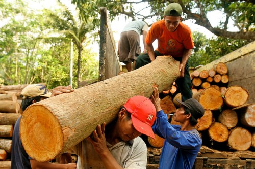 Pekerja menurunkan kayu jati di Jepara, Jawa Tengah, Indonesia. Beberapa konservasionis kini mengusulkan penggabungan wilayah terlindung dengan konsesi penebangan untuk menjaga lanskap hutan lebih luas daripada yang mungkin ada melalui wilayah terlindung sendiri, tulis peneliti CIFOR. Klik di sini untuk membaca lebih lengkap. Murdani Usman/Foto CIFOR.