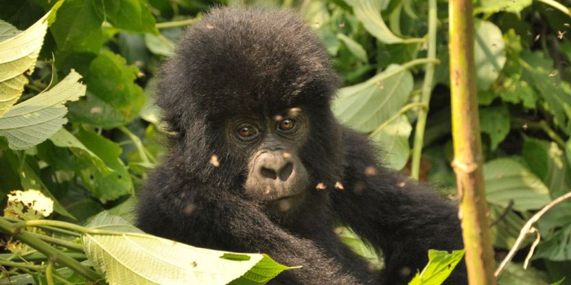 Virunga National Park is under severe pressure from illegal encroachment and exploitation of natural resources.