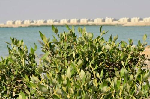 Una investigación estudia la adaptación de los manglares ante el aumento del nivel de mar. Foto Neil Palmer/ CIAT