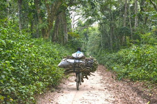 Kisangani, Democratic Republic of Congo. Ollivier Girard/CIFOR photo