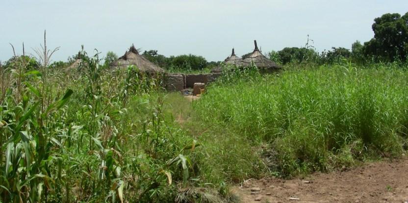 Paysage de la région de Pabré au Burkina Faso. Temoigner.ch