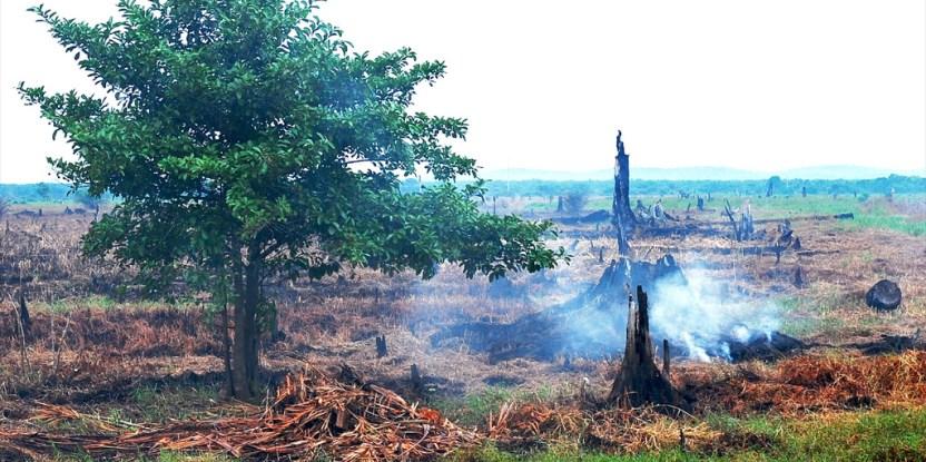 Memadamkan kebakaran hutan bukan sekedar mengerahkan tenaga teknis ke lapangan dan menciptakan hujan buatan. Foto @CIFOR