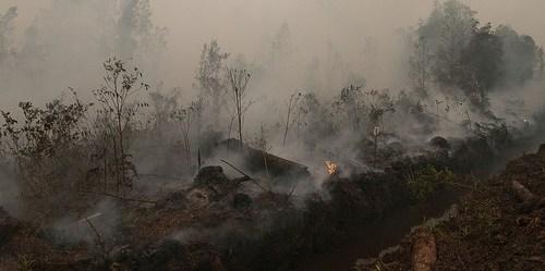 Penggalian kanal di lahan gambut bisa membuat gambut lebih kering, lebih dalam, dan menjadi lebih mudah terbakar. Aulia Erlangga/CIFOR