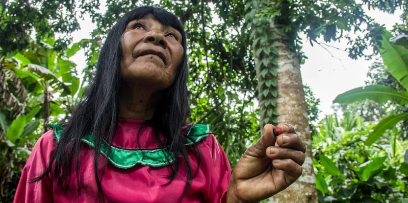 Shipibo-Konibo women use forest resources to continue their traditional handicrafts.