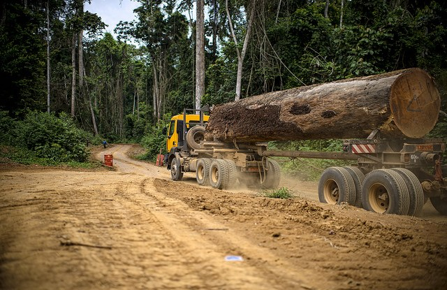 Research suggests that timber plantations could actually be a prime solution to promote forest conservation.  Olliver Girard CIFOR