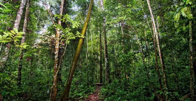 En Colombia las creencias tradicionales de los cazadores tienen el efecto involuntario de apoyar la conservación de la vida silvestre.