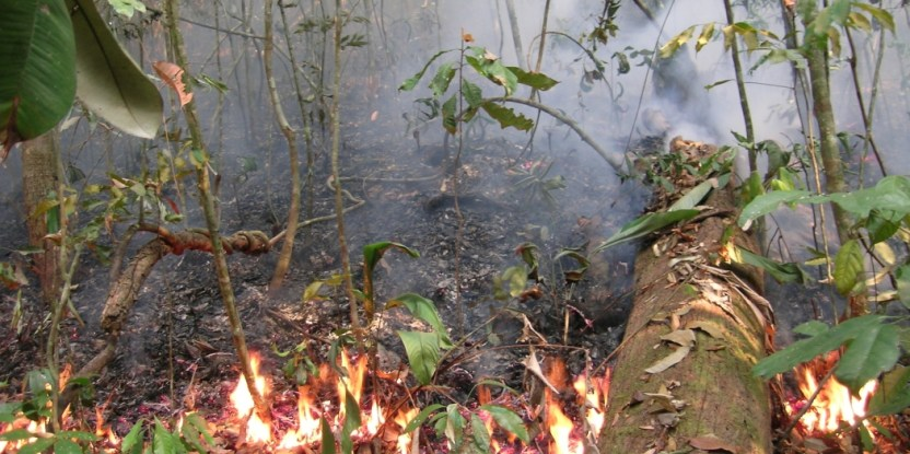 A forest fire in the Brazilian Amazon. Photo credit: Jos Barlow/Lancaster Environment Center