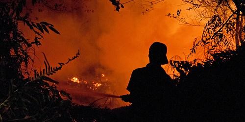 Riset terbaru menemukan 884 juta ton karbon dioksida dilepaskan tahun lalu – 97% berasal dari kebakaran di Indonesia.