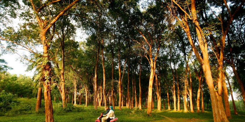 Teak plantations, like this one in Jepara, Central Java, are among the most positively received types of tree plantations in Indonesia. Photo: Murdani Usman