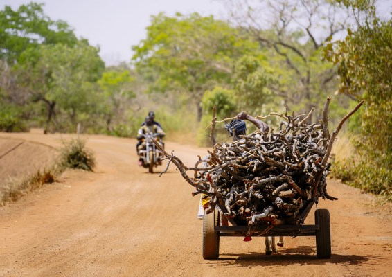 A woman drives a cart of firewood back to Zorro village, Burkina Faso. CIFOR Photo