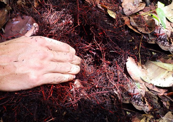 Investigadores de CIFOR examinan suelos de turba en la Amazonia peruana como parte del programa SWAMP.