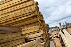 Permalink to: Legalizing Cameroon's timber production chain