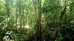 Beyond tree planting: the case for natural regeneration of forests