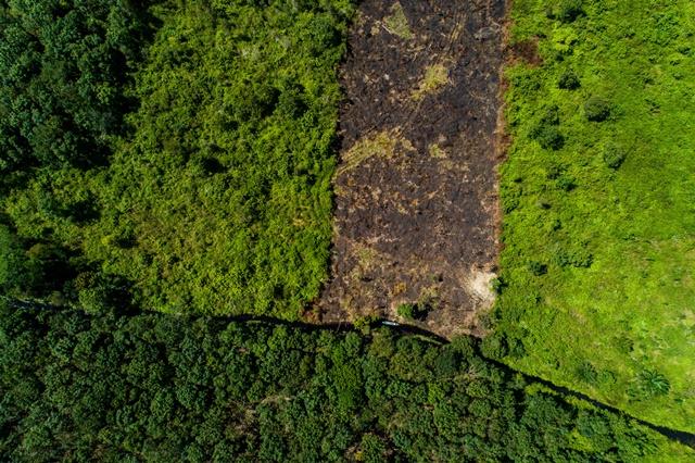 ¿Por qué es tan difícil informar de manera fiable y uniforme respecto a la  deforestación mundial?