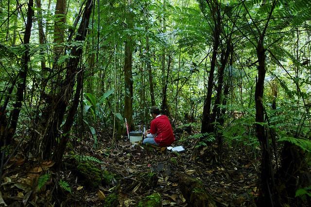 CarboScen: Nueva herramienta calcula cambios en el carbono de los paisajes