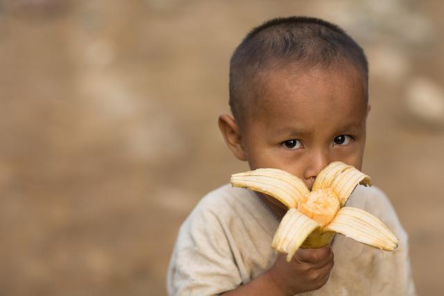 Los bosques: cruciales para la seguridad alimentaria y la nutrición mundial
