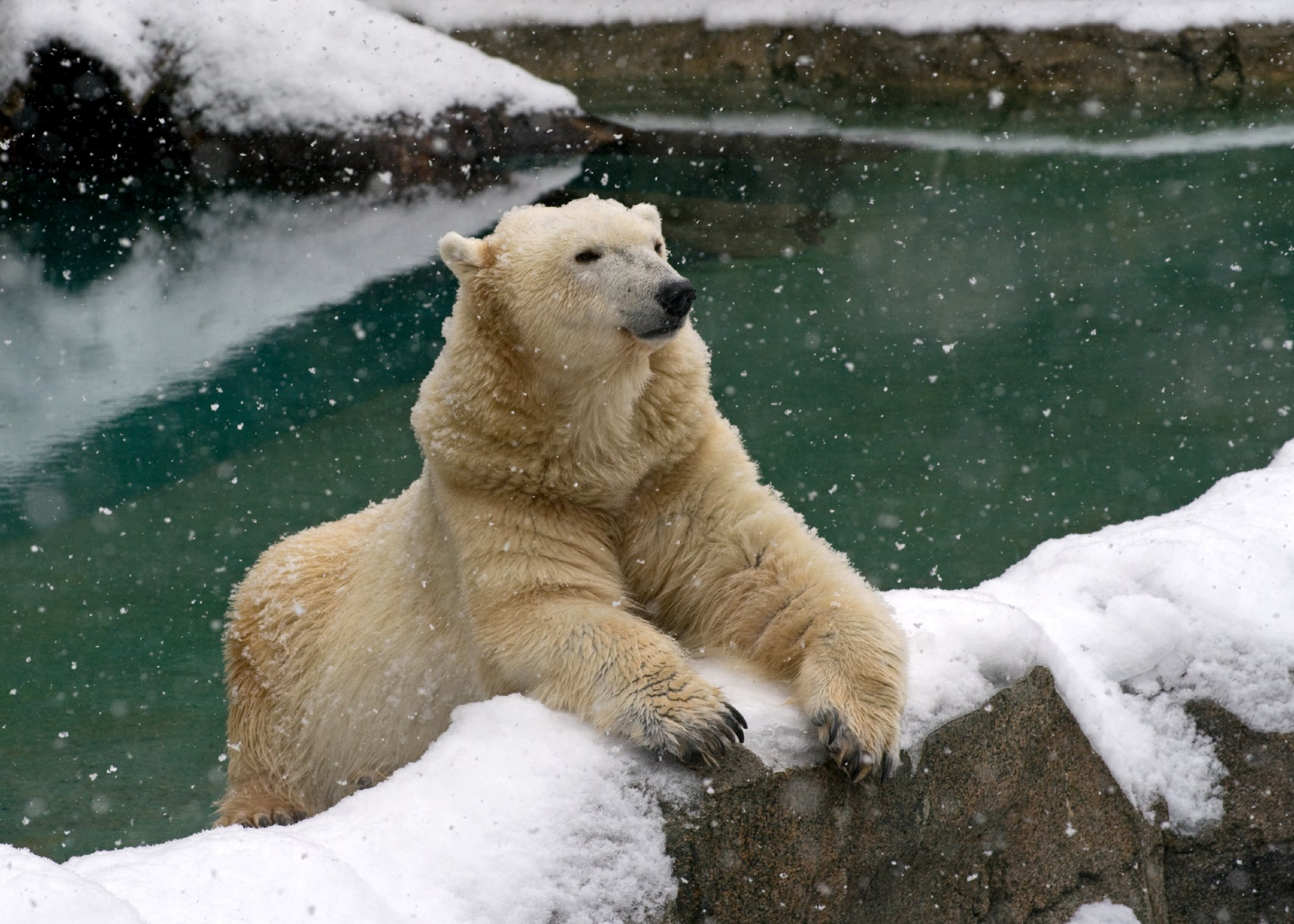Paws Up For Polar Bears Celebrating International Polar
