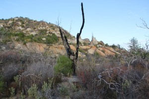 preserve snag and mountain